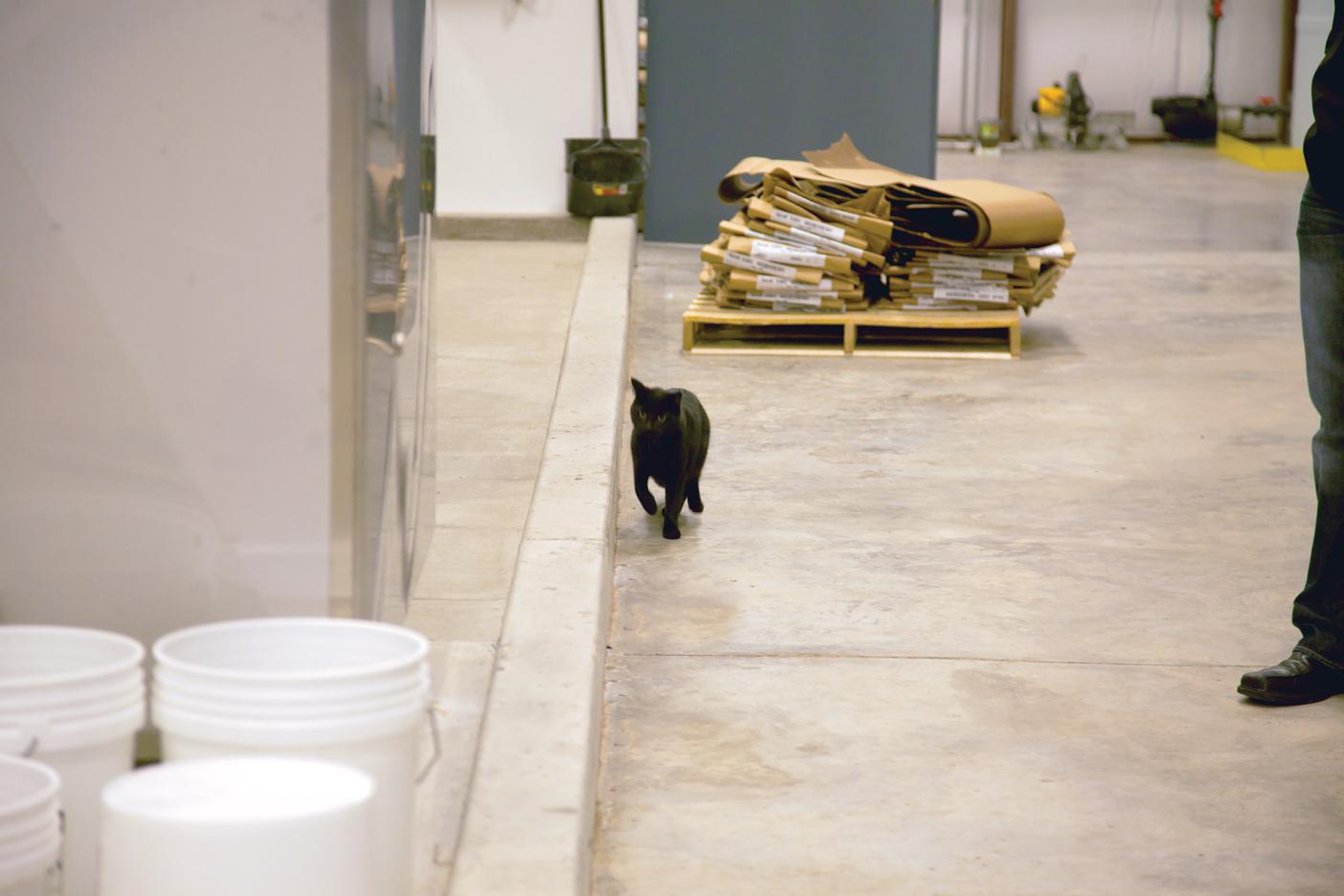 Bur Oak Brewing Company Cat, Clyde