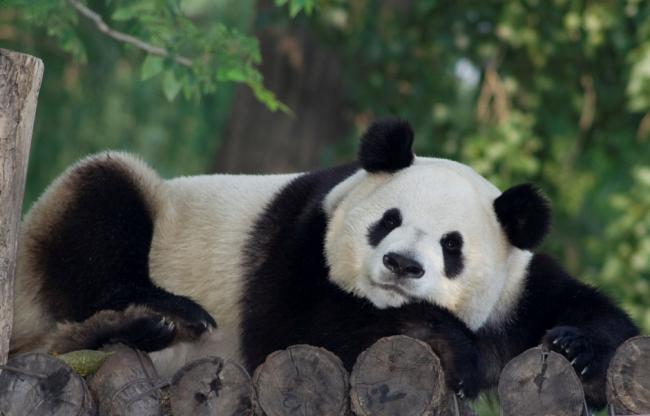 Panda 4.1 Update - Imrpove SEO