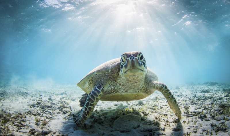 Turtle picture at 800px wide