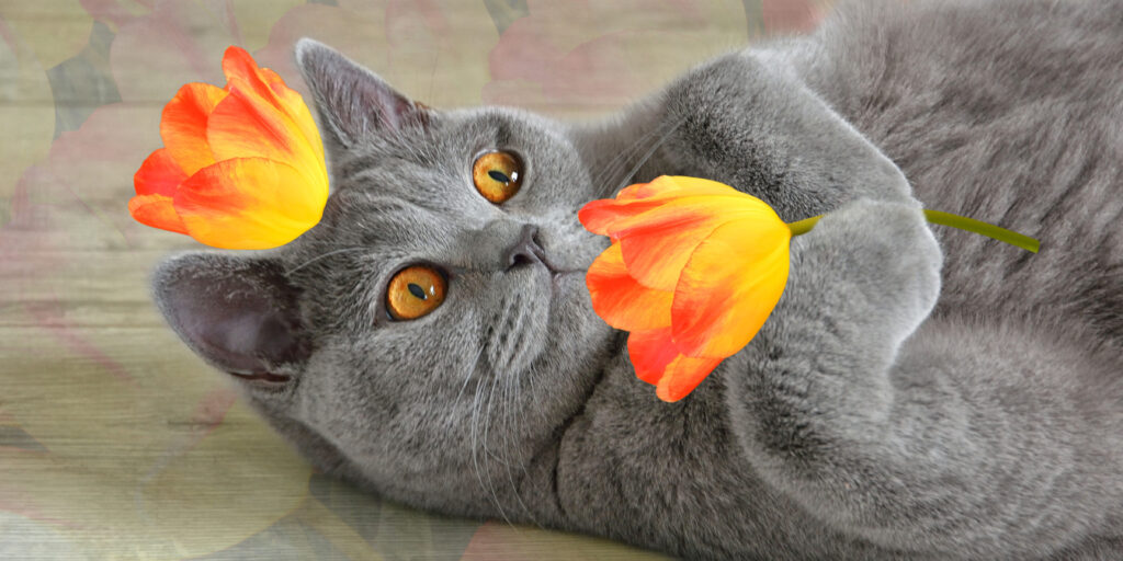 Facebook Fundamentals: How to Like Other Pages as your Page - Tulip Cat