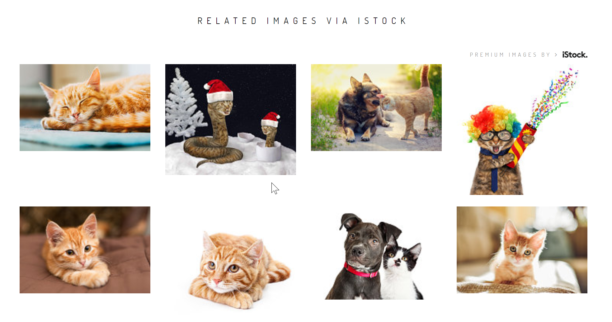 Where to find free stock photos online - Related Images