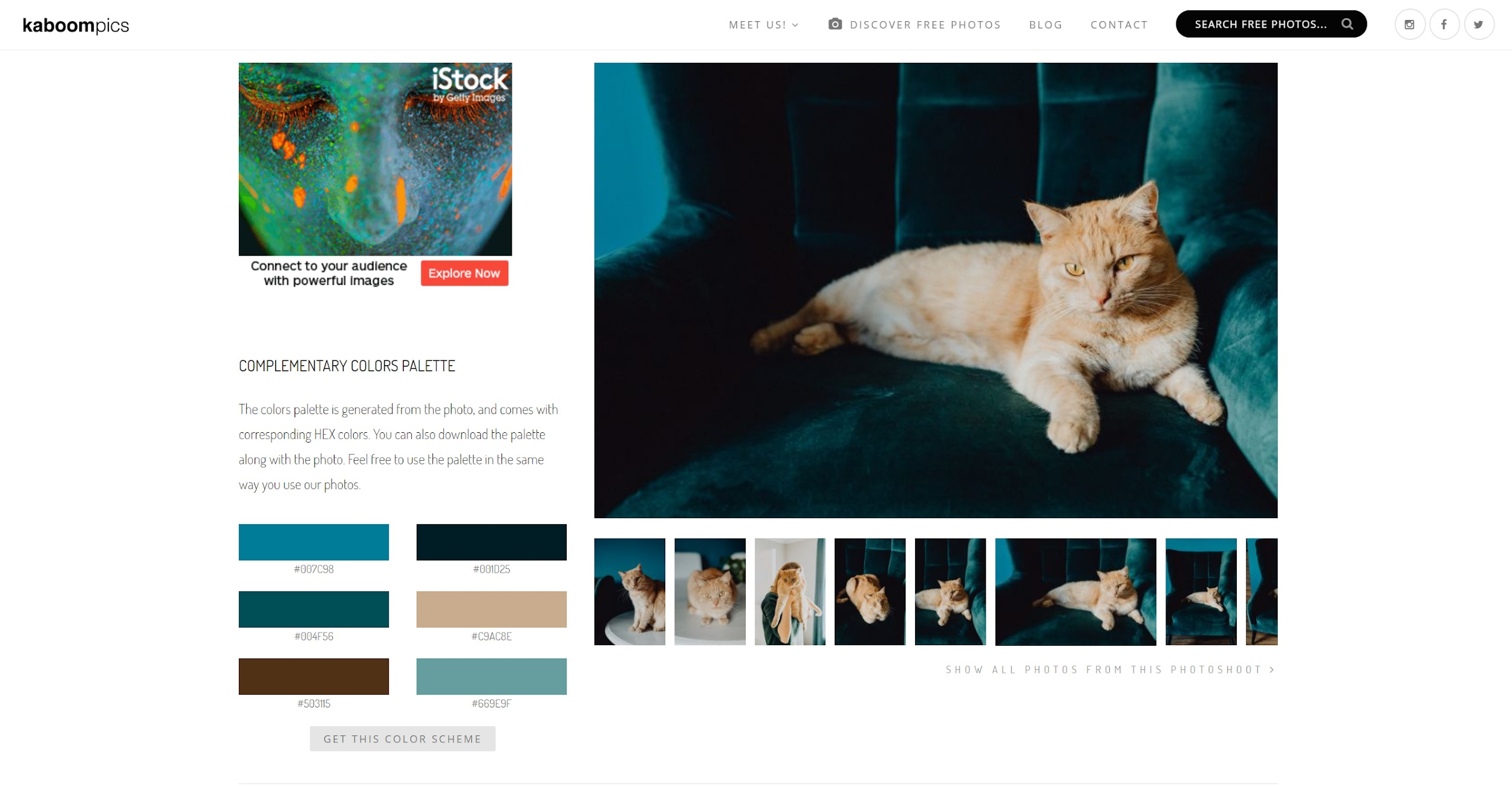 Where to find free stock photos online - Kaboompics Color Palette