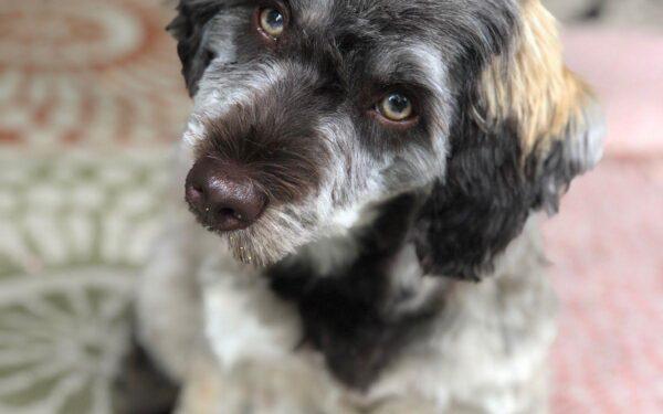 Meet Quimby!